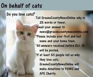 kitty from Tori GCNO