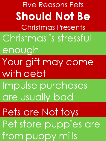 5 Reasons Why Pets Should Not Be Christmas Presents