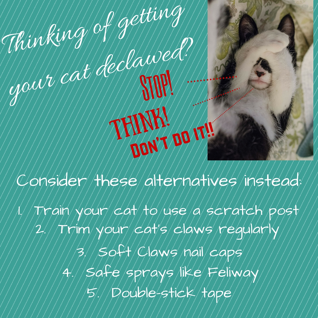 Thinking of getting your cat declawed-